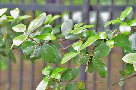 Trees_07