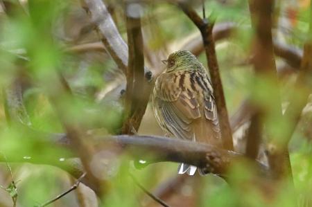 Bird0216_08