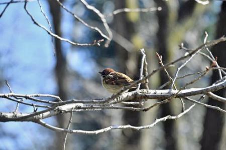 Bird0314_04