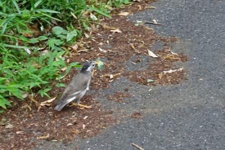 Bird0516
