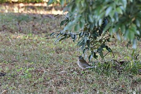 Birds0119_02