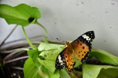 Butterfly0810_01