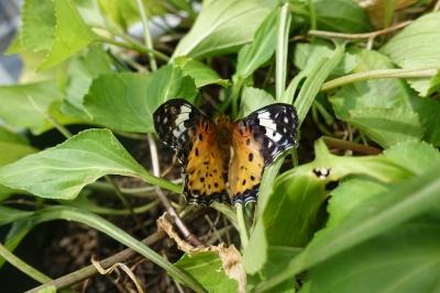 Butterfly0810_02