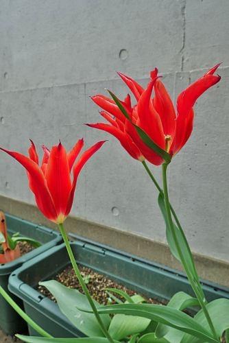Flowers0428_03