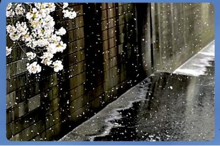 Meguro0328_010