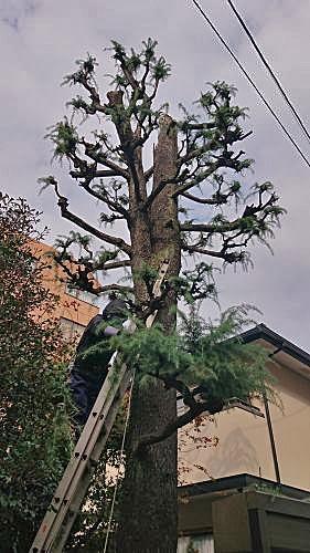 Pine1211_01