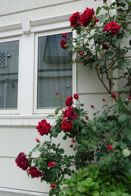 Roses0506