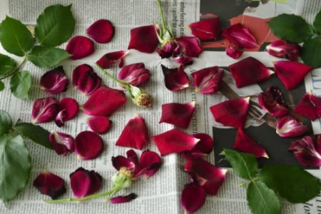 Roses0517