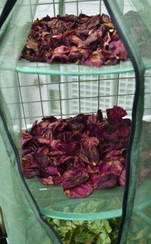 Roses0519