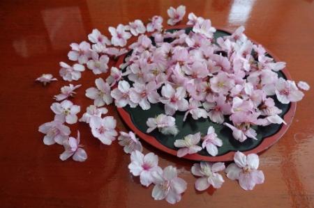 Sakura0225_03