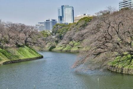 Sakura0319_02