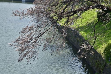 Sakura0319_03