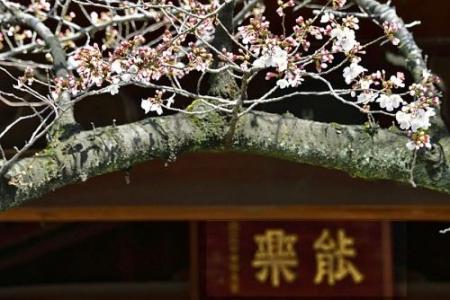 Sakura0319_06