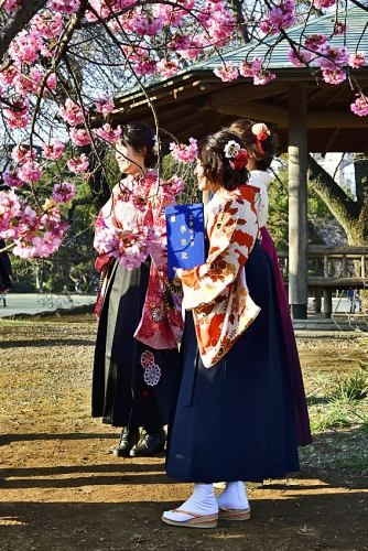 Sakura0319_13