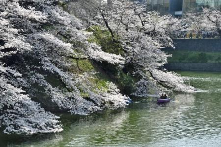 Sakura0323_05