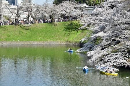 Sakura0323_07