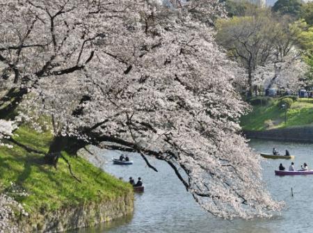 Sakura0323_09