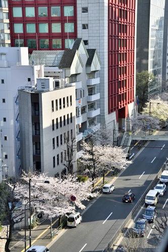 Sakura0323_17