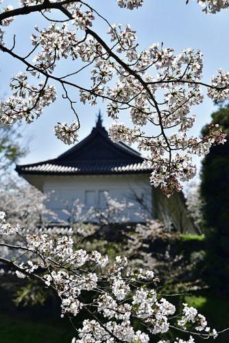 Sakura0402_06