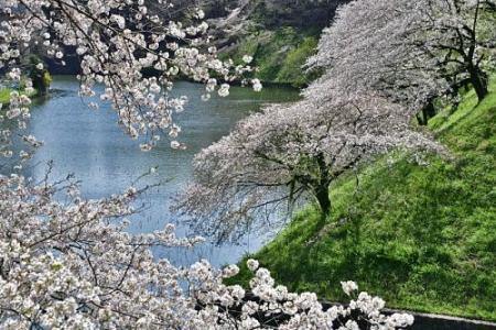 Sakura0402_07