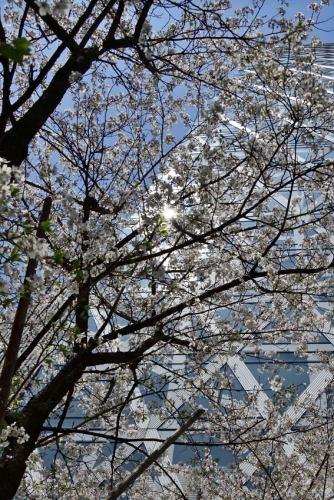 Sakura0402_10
