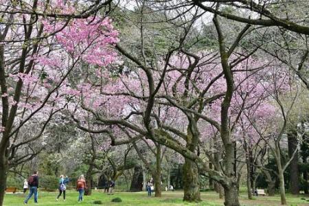 Sakurai0313_07