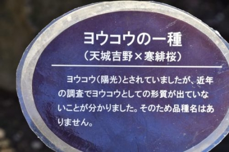 Sakurai0313_08