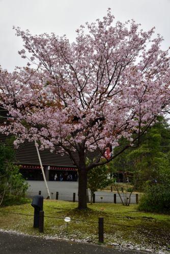 Sendaiya0323