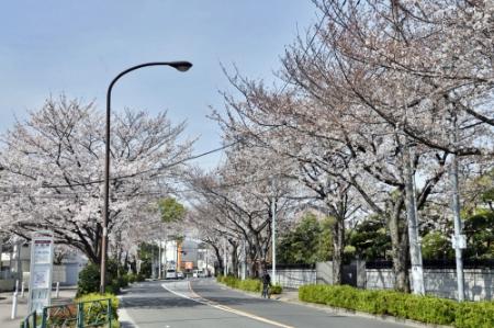 Tamagawa0327_02