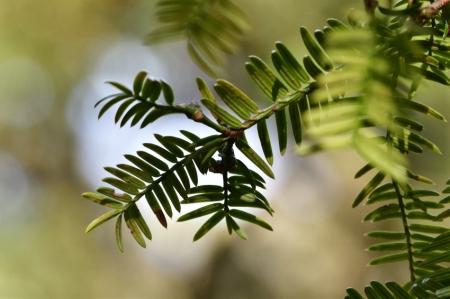 Tree1224