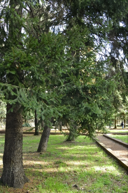 Tree1224_06