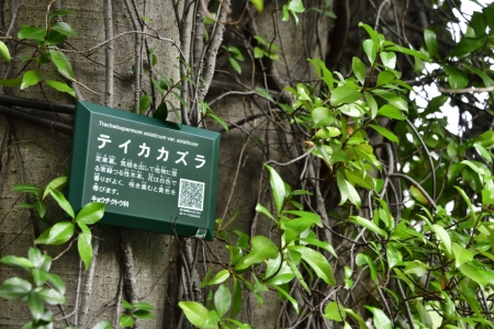 Yoyogipark